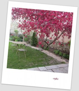malus y cerezo en flor (15)